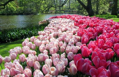 Discover Keukenhof with DFDS Seaways and Ferrysavers!