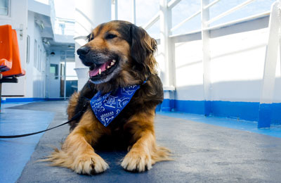 Pet Travel Guide | Pet Passports, Pets on Ferries